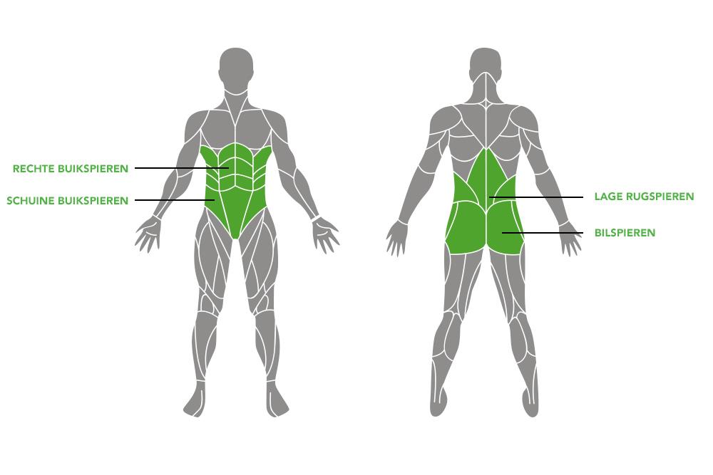 <h3><strong>Uit welke spieren bestaat je core?</strong></h3>