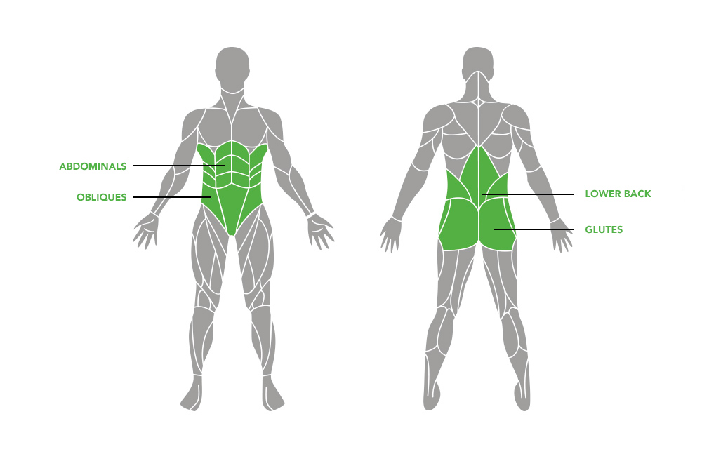 <h3><strong>Which muscles does your core consist of?</strong></h3>